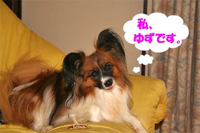 yuzu070907-1.jpg