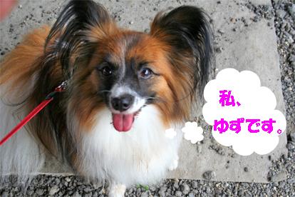 yuzu070911-2.jpg