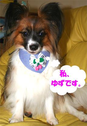 yuzu070912-1.jpg