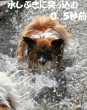 yuzu070913-3.jpg