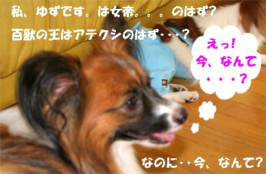 yuzu070918-1.jpg