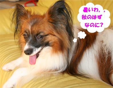 yuzu070925-1.jpg