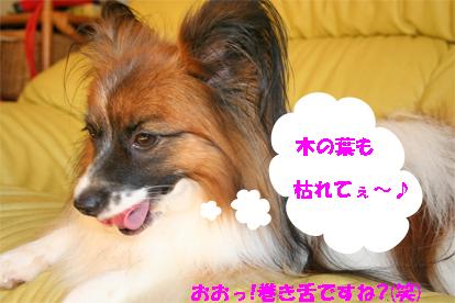 yuzu070925-2.jpg
