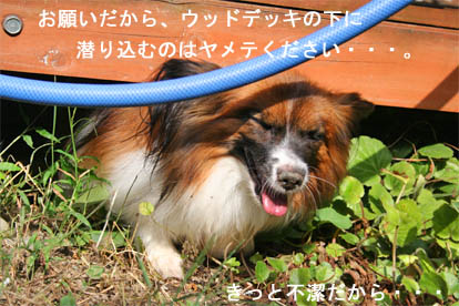 yuzu070926-1.jpg