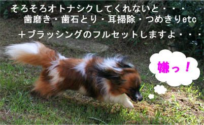 yuzu070926-2.jpg