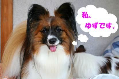 yuzu070927-1.jpg