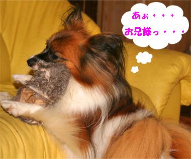 yuzu070928-11.jpg