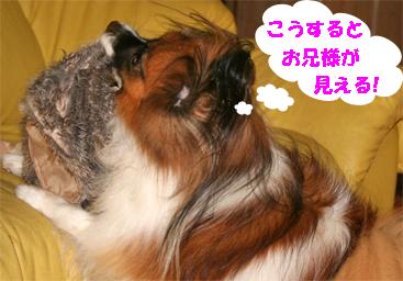 yuzu070928-12.jpg