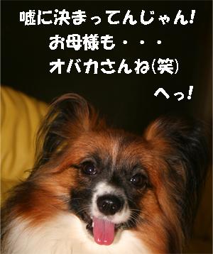 yuzu070928-13.jpg