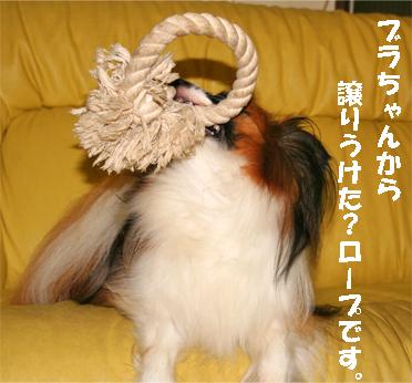 yuzu070928-8.jpg
