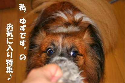 yuzu070928-9.jpg