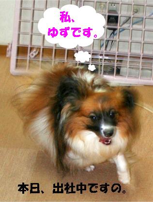 yuzu071005-1.jpg