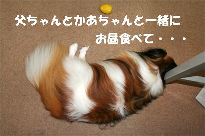 yuzu071005-2.jpg