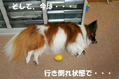 yuzu071005-3.jpg