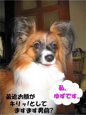 yuzu071006-1.jpg
