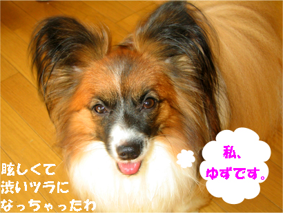 yuzu071007-1.jpg
