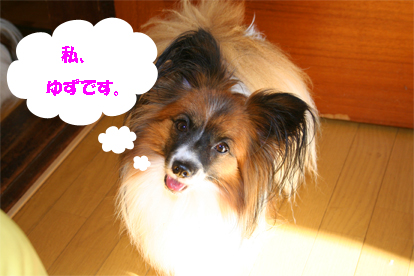 yuzu071015-1.jpg