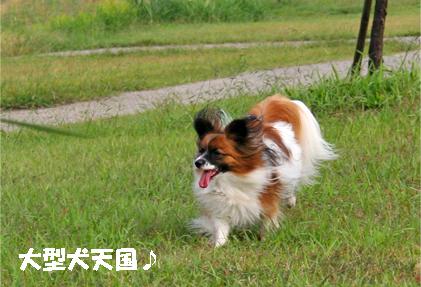 yuzu071017-2.jpg