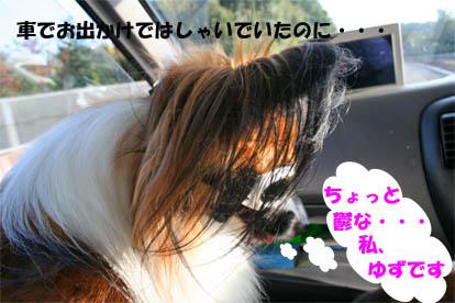 yuzu071020-1.jpg