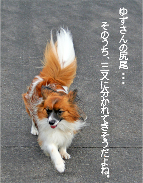 yuzu071023-1.jpg