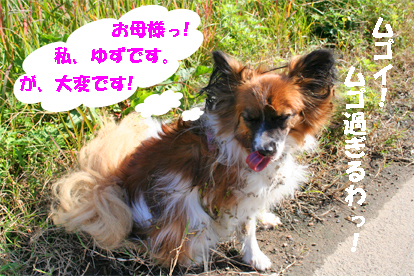 yuzu071028-2.jpg