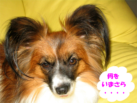 yuzu071101-1.jpg