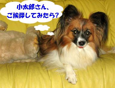 yuzu071101-2.jpg