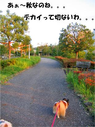 yuzu071105-1.jpg