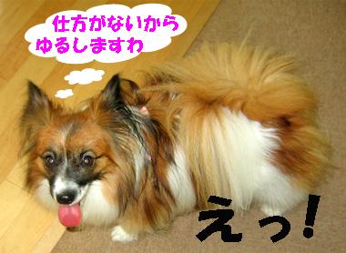 yuzu071106-3.jpg