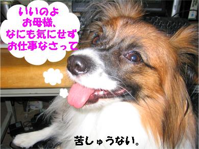 yuzu071106-5.jpg