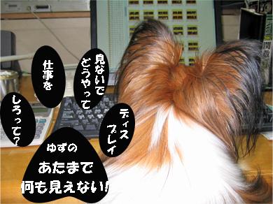 yuzu071106-6.jpg