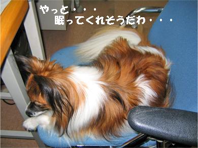 yuzu071106-7.jpg
