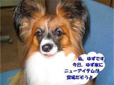 yuzu071107-2.jpg