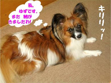 yuzu071108-1.jpg