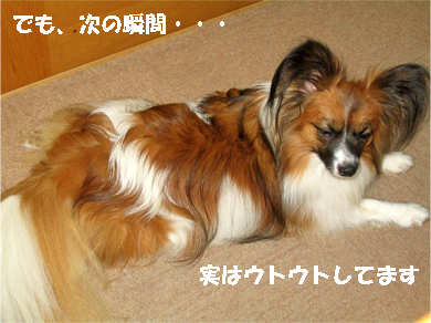 yuzu071108-2.jpg
