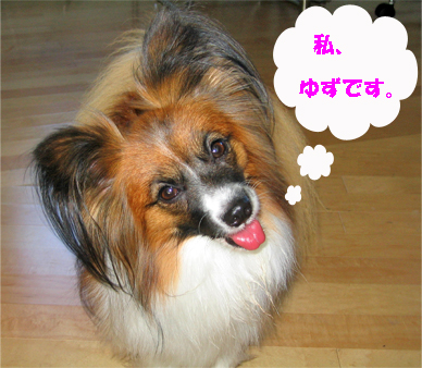 yuzu071112-1.jpg