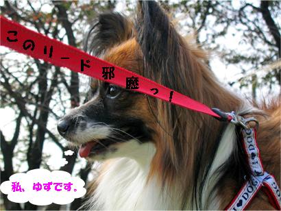 yuzu071114-1.jpg