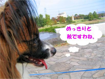 yuzu071114-2.jpg