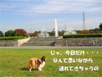 yuzu071114-3.jpg