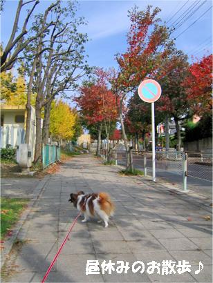 yuzu071116-1.jpg