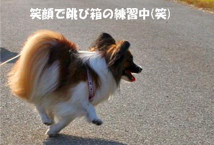 yuzu071126-2.jpg