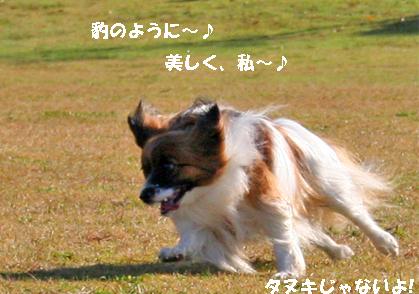yuzu071204-1.jpg