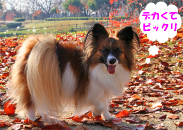 yuzu071211-1.jpg