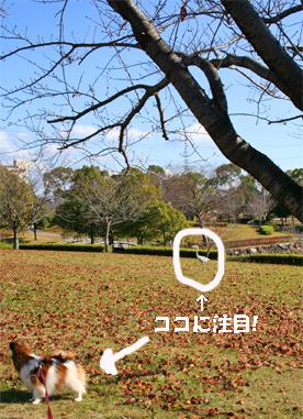 yuzu071212-1.jpg