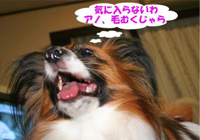 yuzu071221-1.jpg