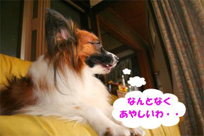 yuzu071224-1.jpg