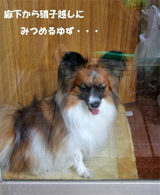 yuzu071224-2.jpg