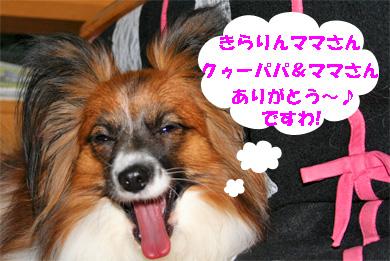 yuzu071226-1.jpg