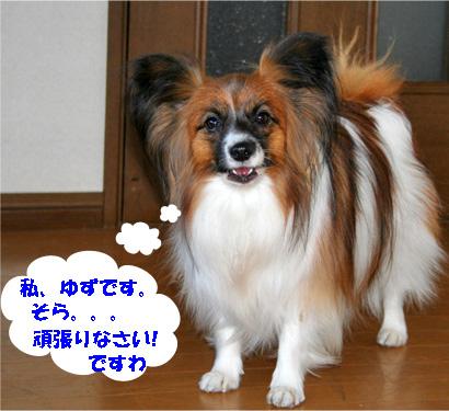 yuzu080110-1.jpg