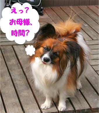 yuzu080122-1.jpg